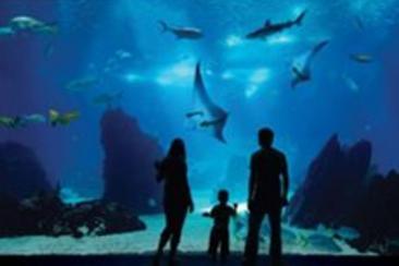 新加坡名勝世界 S.E.A 海洋館 電子票券