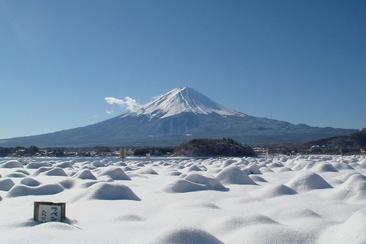 【東日本鐵道假期】富士山 河口湖一日遊(內含JR東京廣域3日券)