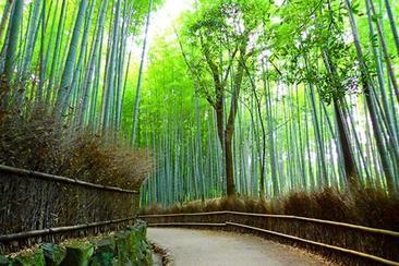 春季特價優惠!京都嵐山, 滋賀近江神宮 , 江戶古街一日遊