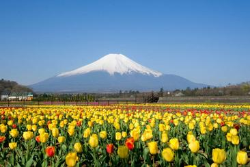 【東日本鐵道假期】富士山 山中湖一日遊