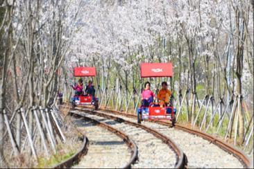 【韓國】江村鐵道x小王子村x南怡島一日遊