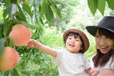 富士山採摘水果一日遊