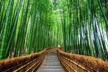 【一日遊】嵐山・金閣寺・奈良公園(附午餐 一人成行 大阪出發)