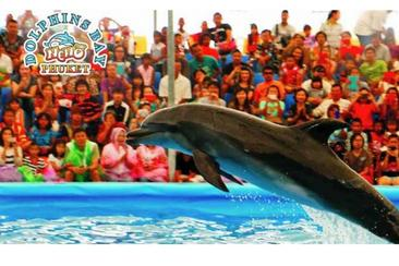 【普吉島】尼莫海豚館Dolphins Bay Phuket表演門票--電子票