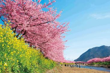 【東日本鐵道假期】河津櫻花祭一日遊(內含JR東京廣域3日券)