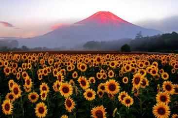【東日本鐵道假期】富士山富士湖號巴士一日遊(內含JR東京廣域3日券)