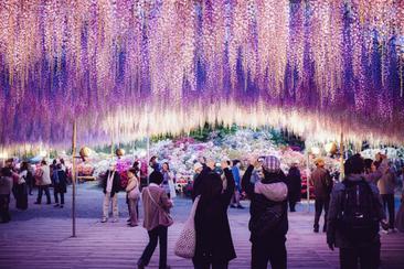【東日本鐵道假期】 足利花卉公園一日遊(內含東京廣域3日券)