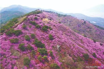 【韓國】江華高麗山杜鵑花節、斜坡滑車一天團
