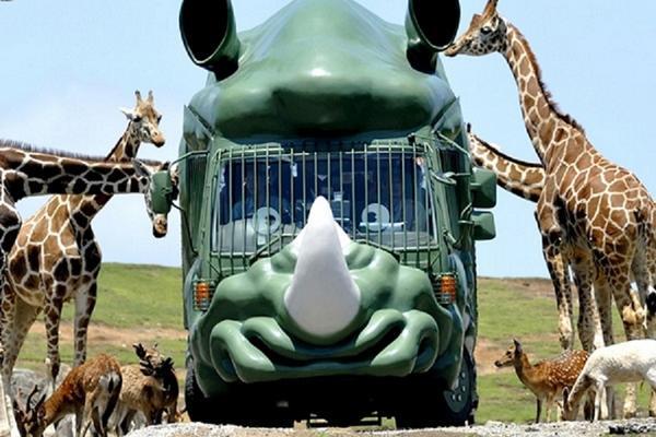 【九州親子狂歡】KITTY樂園、叢林巴士、熊部長辦公室、宮地湧水群5日