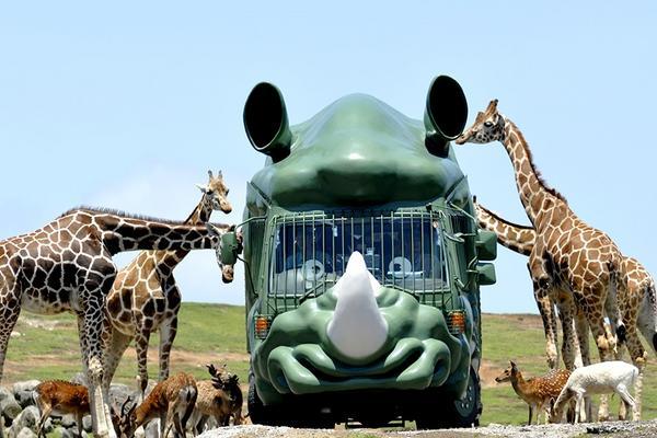 【FUN暑假九州動物園】叢林巴士、KITTY樂園、採果趣、柳川扁舟5日