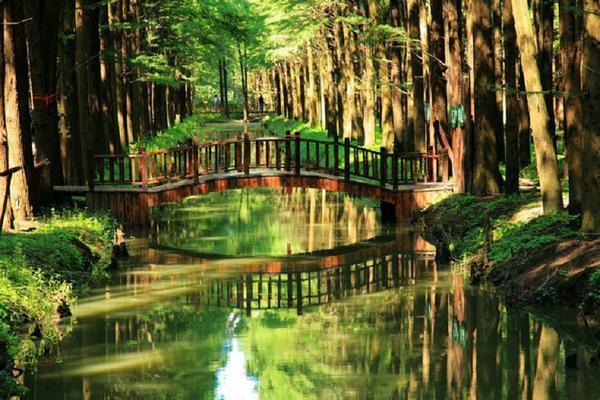 走進江蘇尋鮮美食、靖江湯包之鄉、原生態風貌、庭園美景5日
