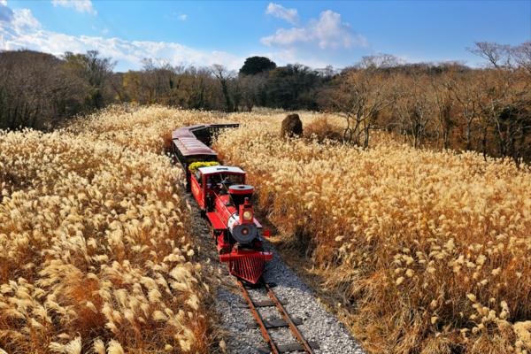 釜濟跳島雙城趣~神話主題樂園、松島纜車、雪綠茶、森林小火車5日(釜航)