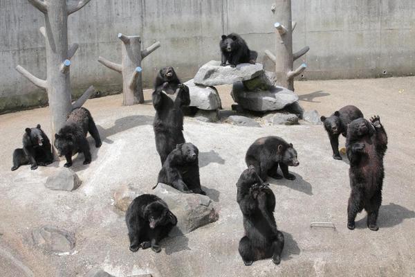 【元氣北海道】函館山夜景、北極熊游泳、小樽熊牧場、和牛螃蟹5日(BR138/165)