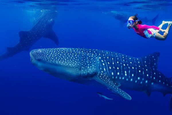 【超值宿霧】鯨鯊共舞~沙丁魚風暴~長榮直飛5日【含稅燃】【無購物】