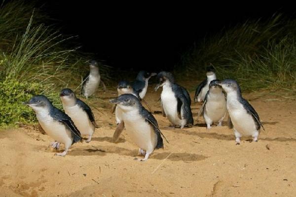 【送雪梨夜景】精彩墨雪雙城七日~企鵝、蒸汽火車、無尾熊、歌劇院、遊船