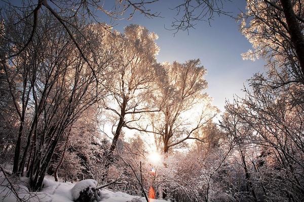 【長榮航空】東北雪鄉戲雪、羊草山觀日出、虎林園景區五日 ( 入住雪鄉一晚 + 3晚喜來登酒店 )