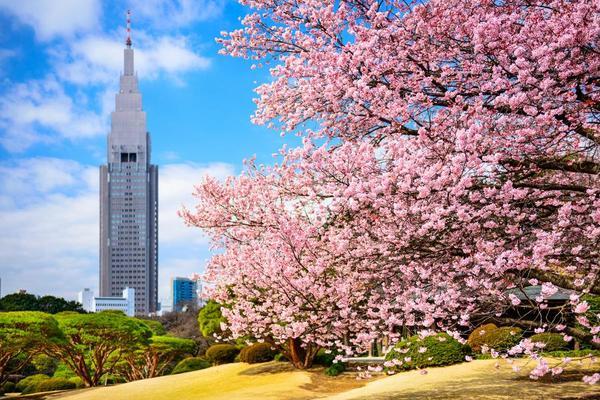 (早去晚回)【花見閃耀東京】迪士尼、晴空塔、箱根電車、海盜船、御苑、螃蟹、美食5日