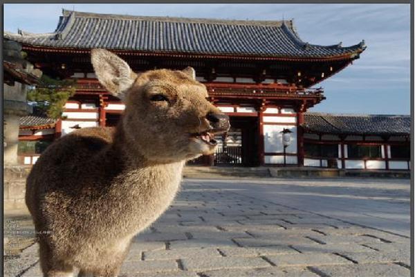 【歡暢三都】大阪魔法環球.奈良梅花鹿.京都嵯峨野火車5日