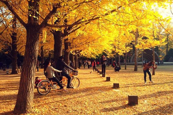 【升等明洞飯店】 楓銀雪嶽~鐵道自行車、浪漫南怡島、樂天樂園、明洞、JUMP秀5日