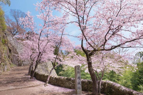 【九州櫻木花道】虹之松原、舞鶴公園、扁舟遊船、鶴見岳纜、湯布院散策6日
