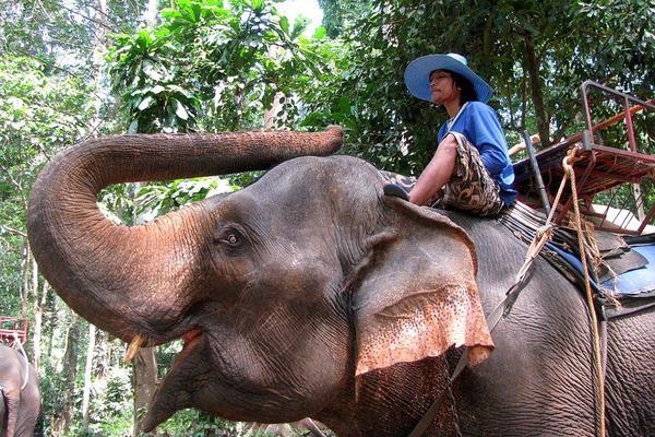 泰國無購物親子遊五天~賽福瑞動物園、曼谷一房一廳、泰國最新奇幻探險KAAN秀、泰式指壓、泰國最大水上樂園、最夯亞洲夜市