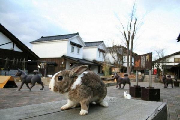 仙境月兔、合掌村溫泉、江戶街道、鶴仙溪遊步道5日