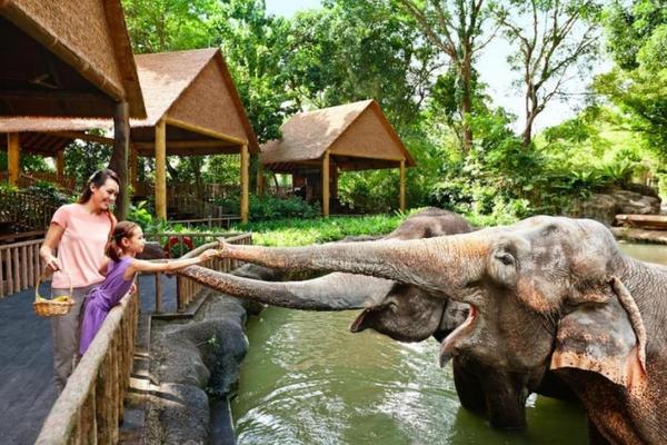 【新加坡】日間開放動物園(含遊園車)(電子票)