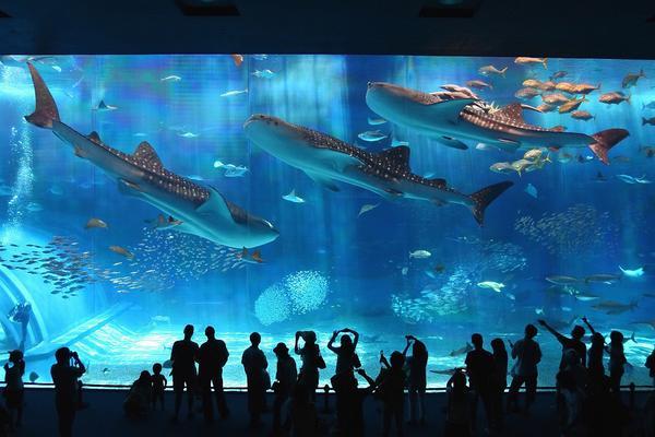 沖繩美麗海水族館兌換券
