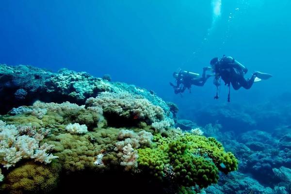 【綠島】綠島海洋潛水體驗