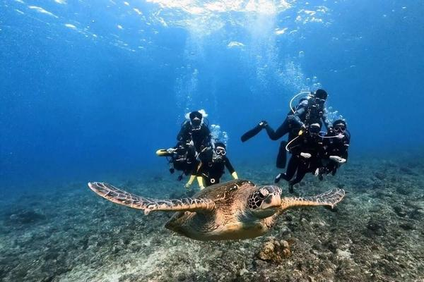 小琉球海洋潛水體驗(免潛水執照)一對一教學