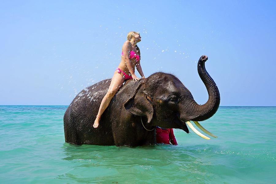 樂活普吉.巴地哇激流┼叢林騎象泛舟SPA5日《含稅金 贈小費》