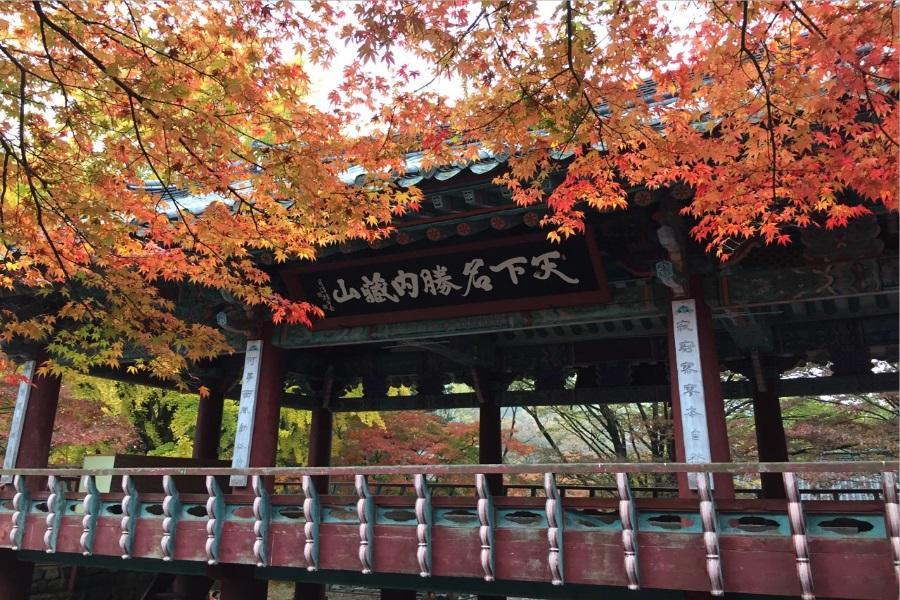 【2晚明洞】安妞楓旅行~內藏山.馬耳山賞楓.熊之森公園.紅蔘SPA5