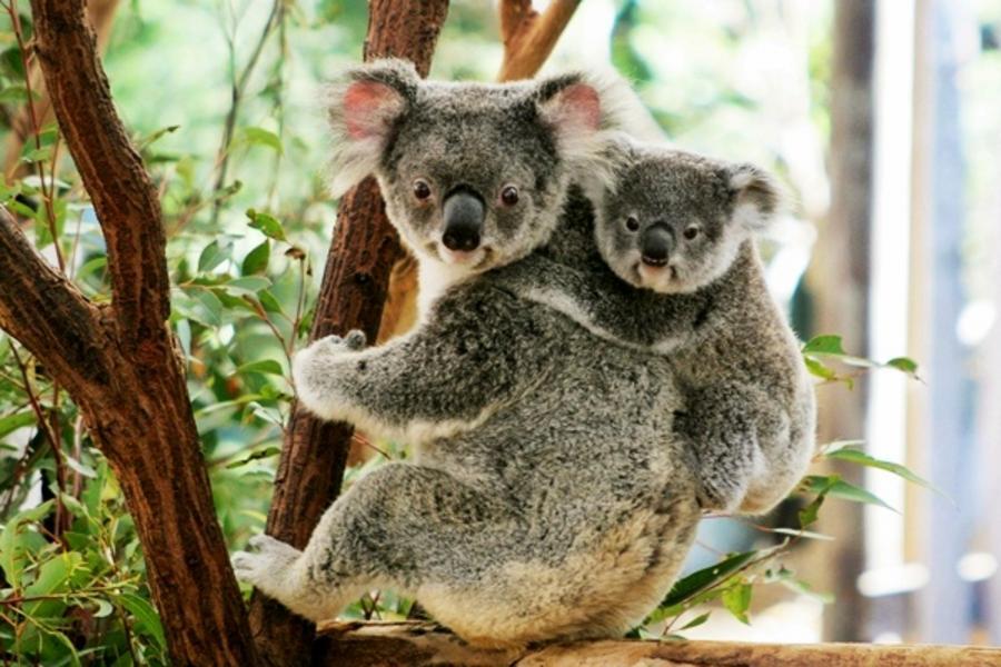 【賺很大】雪梨~杜莎夫人蠟像館、歌劇院入內、藍山纜車、澳式動物園7日