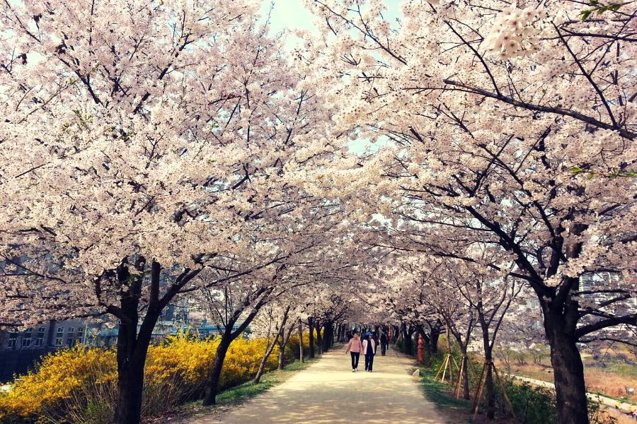 【2晚明洞】韓國炸雞DIY體驗、觀景小火車、星空庭園、不進人蔘保肝5日