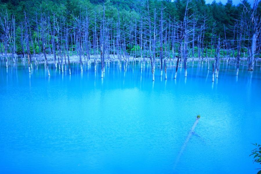 【北海道藍色狂享】青池.大雪森之庭院.冰的美術館.LeTAO下午茶5日