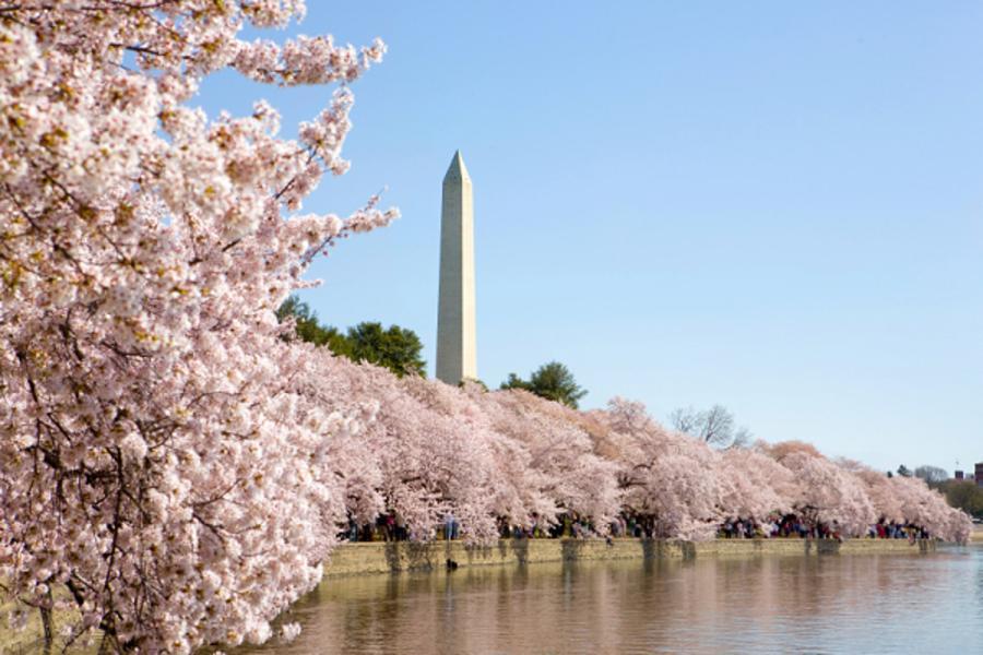 拜訪美南的春天十日遊(倒走)
