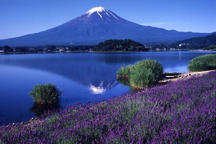 【愛上薰衣草】箱根、御殿場、河口湖薰衣草祭、彩虹樂園、東京迪士尼5日