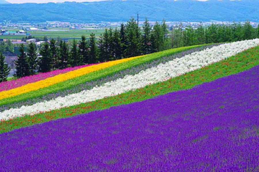 【北海道TOMAMU渡假村】函館星空、海洋尼克斯、沁夏富良野好食光5日
