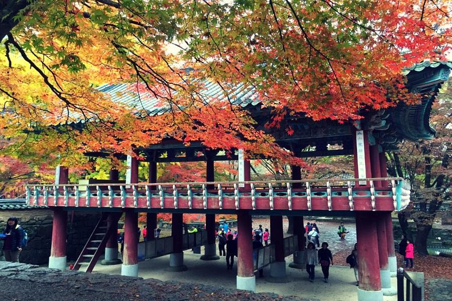 楓紅內藏山~韓國熊之森公園、小希臘村、韓服遊韓屋、汗蒸幕 、景福宮5日