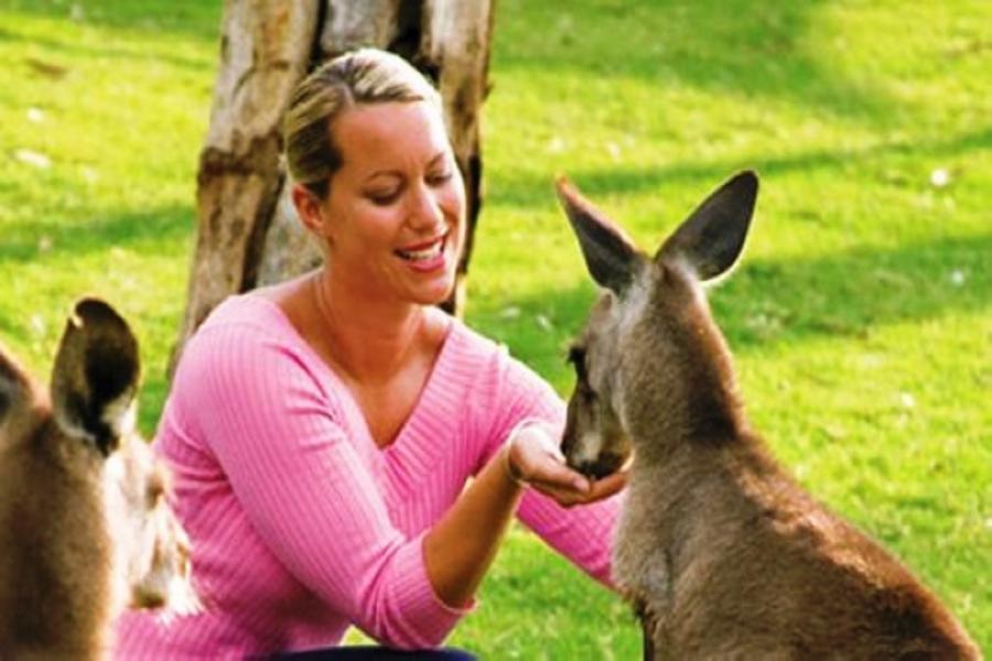 《送無尾熊抱抱合照》歡樂東澳黃金雪梨雙城七日~藍山國家公園 五星天堂鄉農莊+思洛美酒莊BS