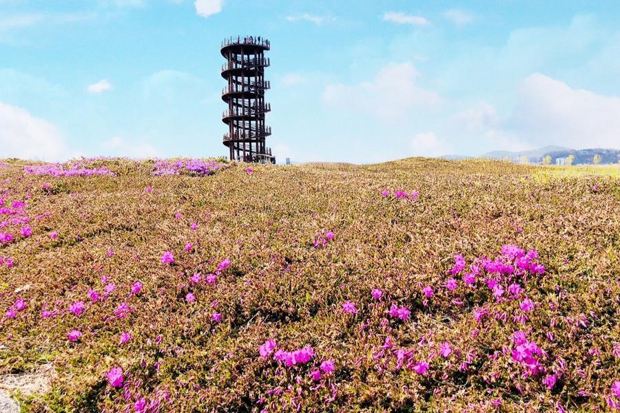 超值韓國~晨靜樹木園.聖托里尼.螺旋瞭望台.天空步道.愛寶4日(早晚)