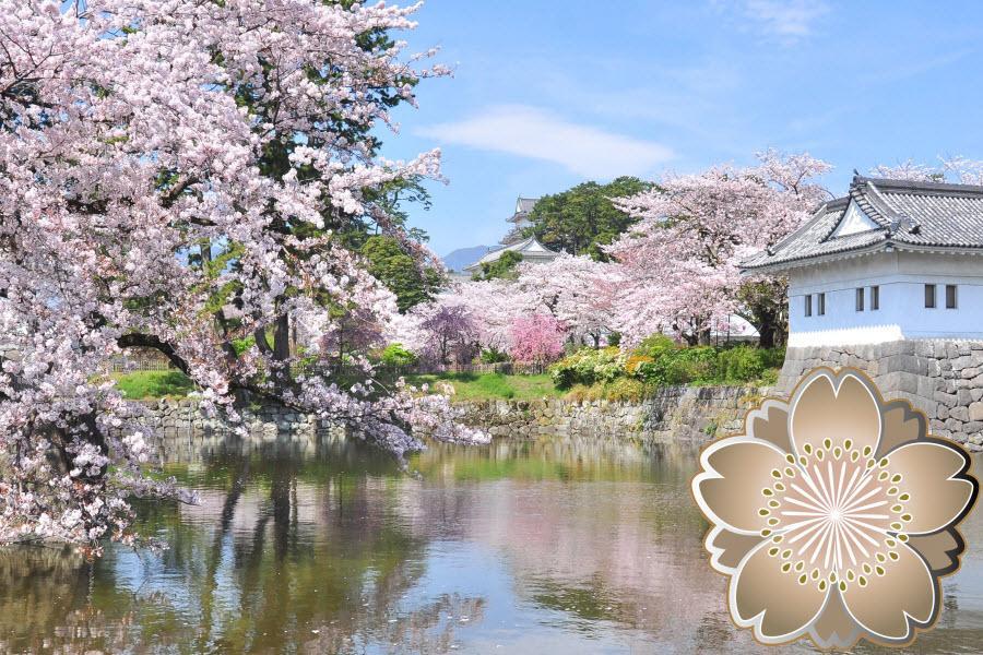 【愛上賞櫻花】百選賞櫻、彩虹樂園、小田原城、箱根、東京迪士尼5日