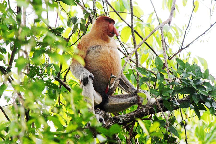 沙巴FUN假趣~海洋樂園、紅樹林生態、長鼻猴、螢河遊蹤5日