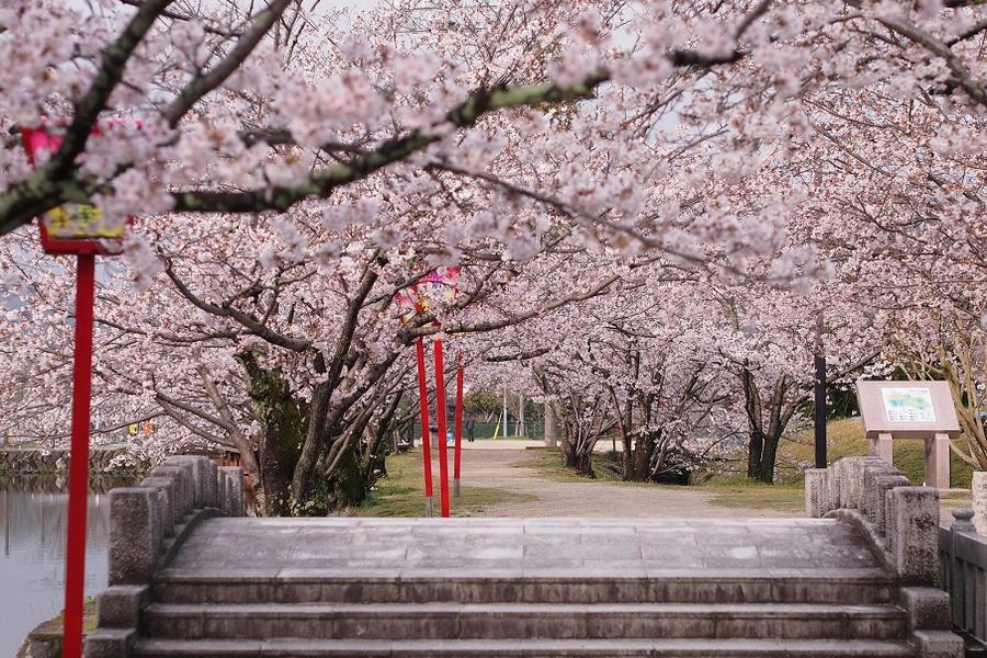 【九州櫻木花道】虹之松原、舞鶴公園、扁舟遊船、鶴見岳纜、抺茶體驗6日