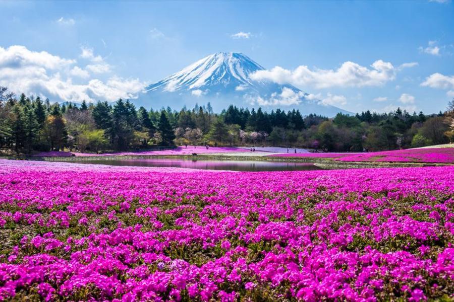 ★立山春景★雪之谷芝櫻季祕境上高地童話合掌村輕井澤喝咖啡溫泉5日