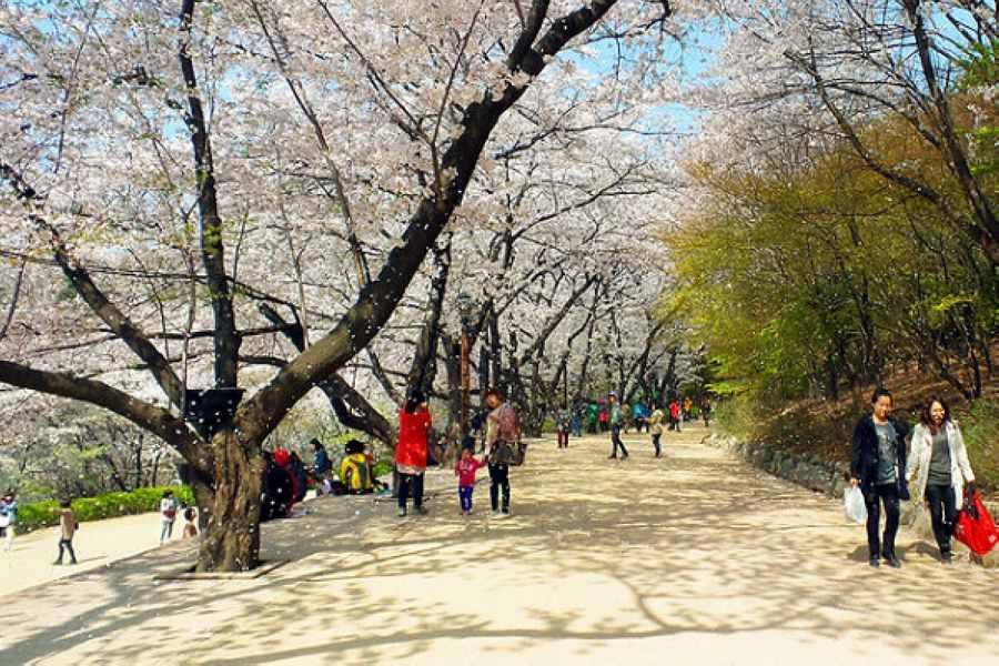 【不走人蔘】春趣韓國~水原華城、愛寶樂園、昌慶宮、廣藏市場、廚師秀5日