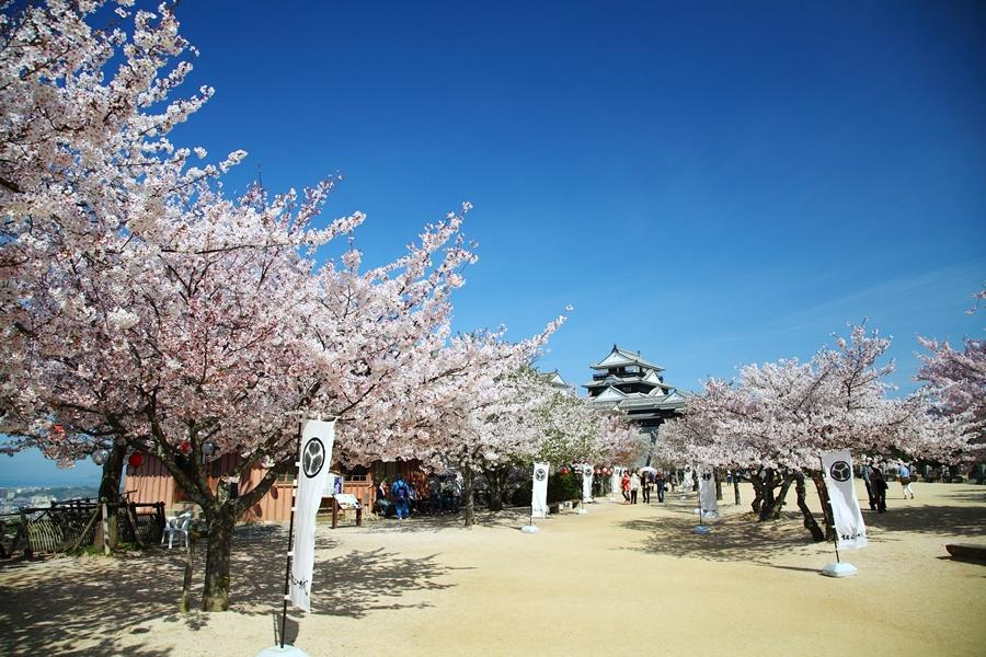 四國松山櫻花饗宴、百選高松琴彈公園、秘境大步危4日之旅