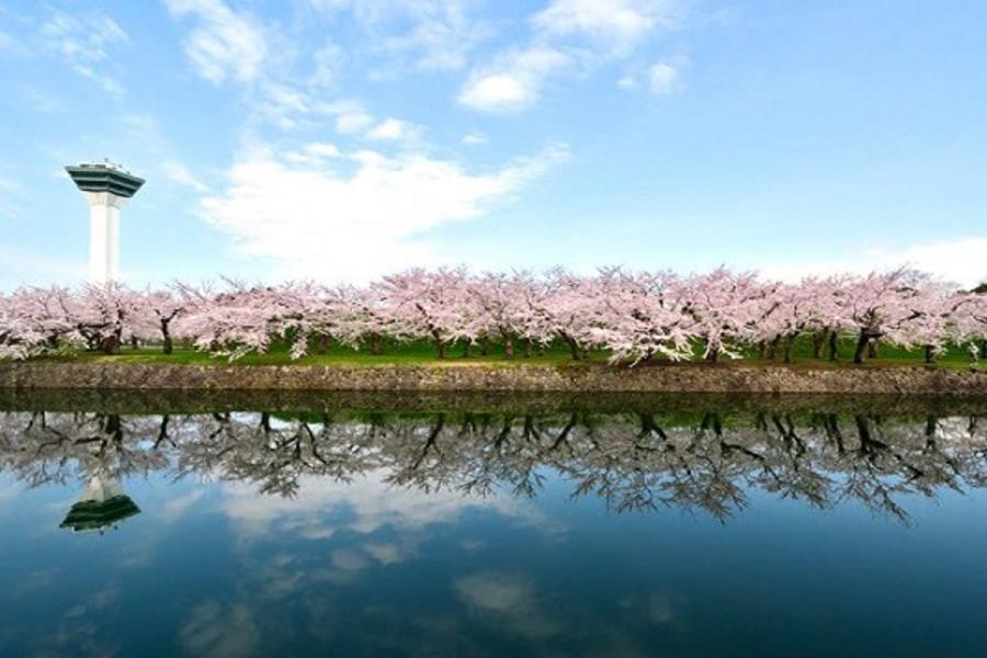 【北海道万惣の宿】璀璨函館、海洋尼克斯、粉櫻好食光5日