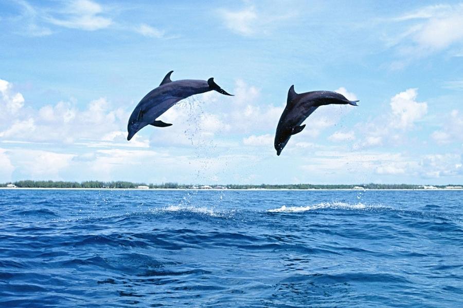 【夏之天草海豚共舞】蝴蝶夫人、別府纜車、扁舟遊船、旅人列車、門司6日