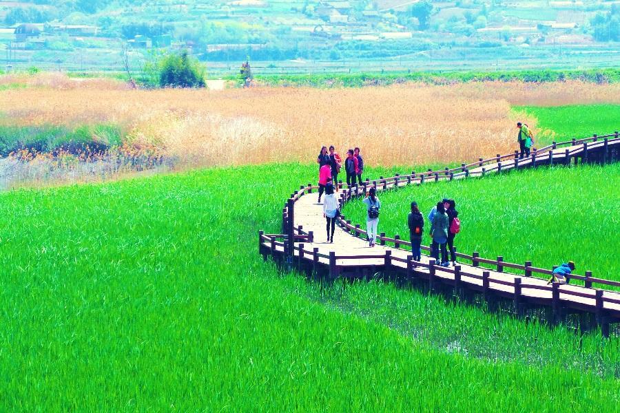 《全羅風情》寶城茶園、順天灣濕地、樂安邑城、閑麗水道纜車、壁畫村6日
